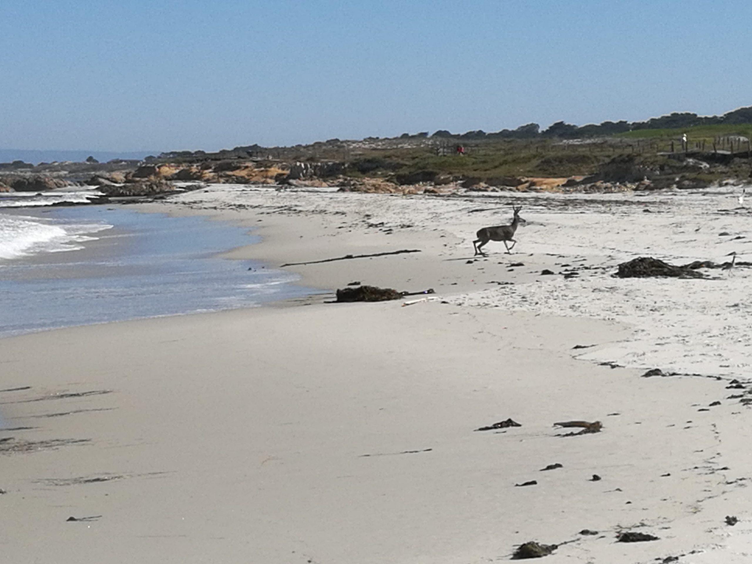 2 Wochen Roadtrip an der Westküste der USA – Monterey & 17-Miles-Drive